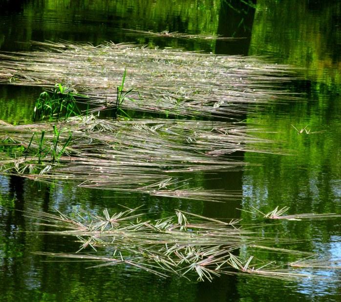 grassesonthewaterpondBedrockGardensNH20May2017