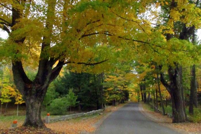 roadbyNixyshouseyellowtreefallcolourbKezarLake16Oct2016