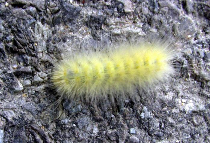 caterpillarImovedoffroadKezarLakeSuttonNH19Aug2017