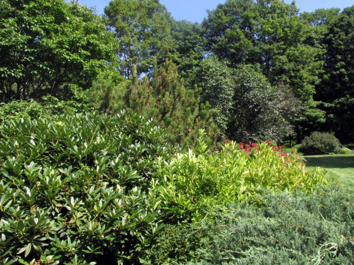 shrubsDistantHillsGardensWalpoleNH6Aug2017
