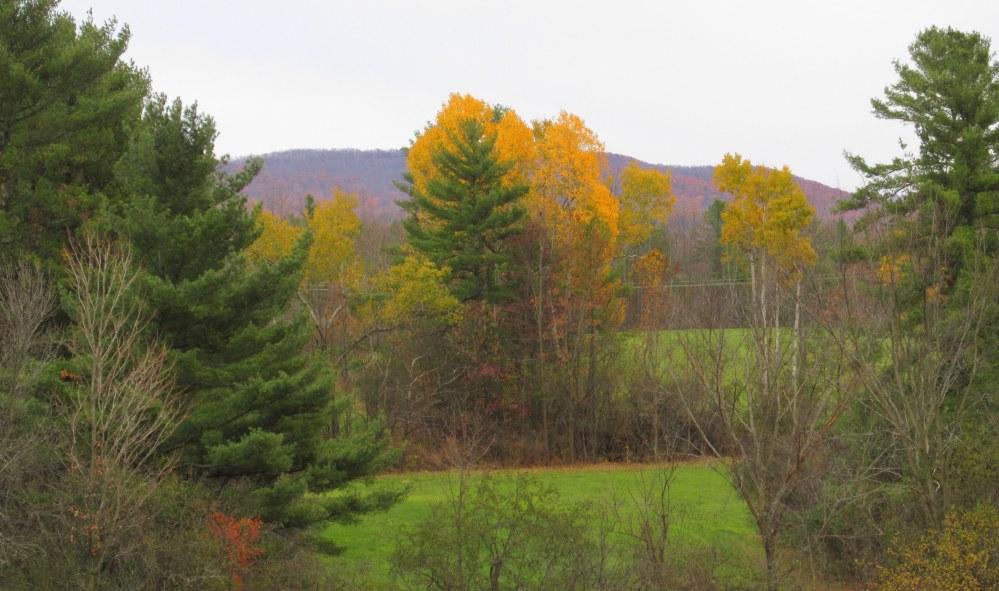 landscapefallcolouryellowtreesBattellWoodsTAMMiddleburyVT31Oct2015