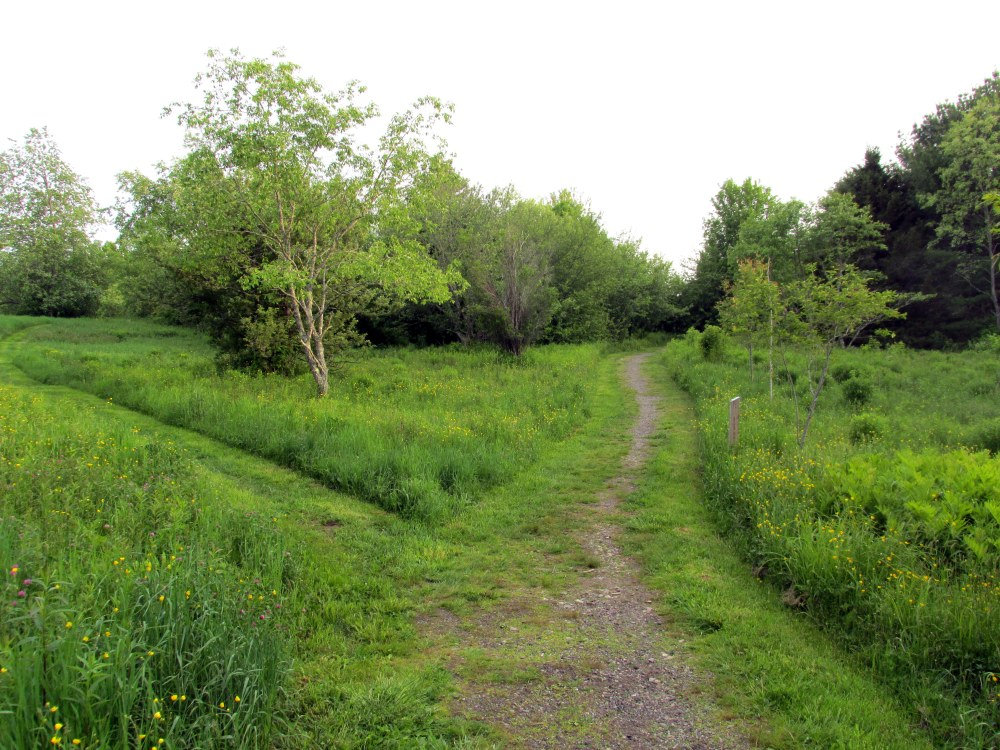meadowtwotrailsPennyLakeBRLT11June2015
