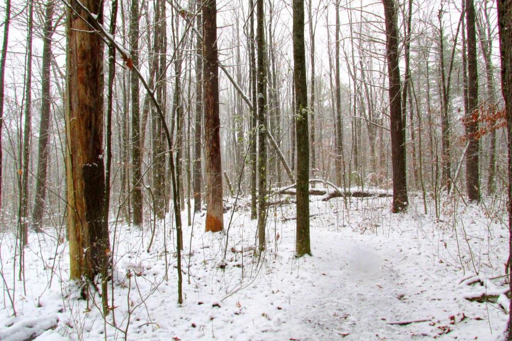 snowytrailtreesBattellNaturePreserveTAMMiddleburyVT24Nov2016
