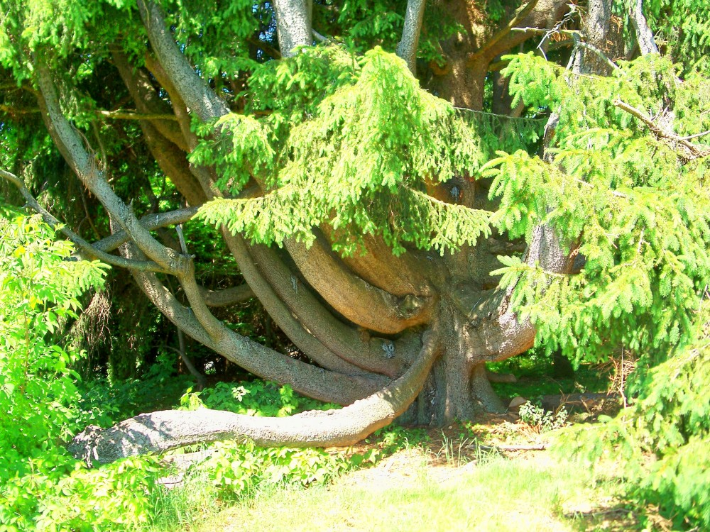 Tanglewoodtreetrunks