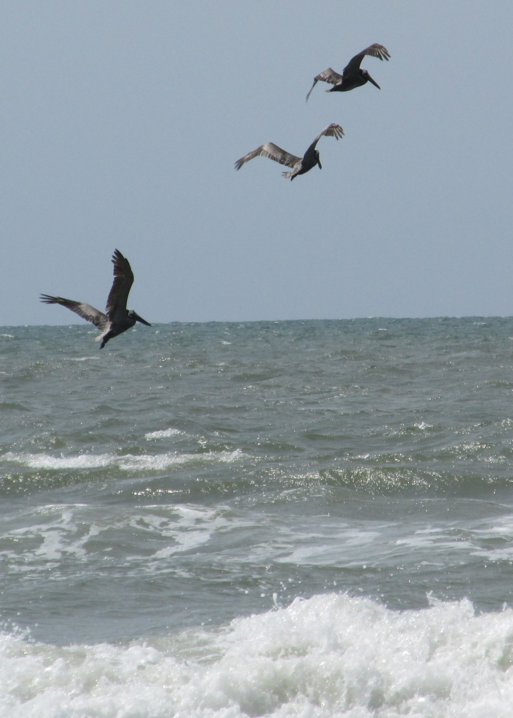 threebrownpelicansinflightNMB21June2014