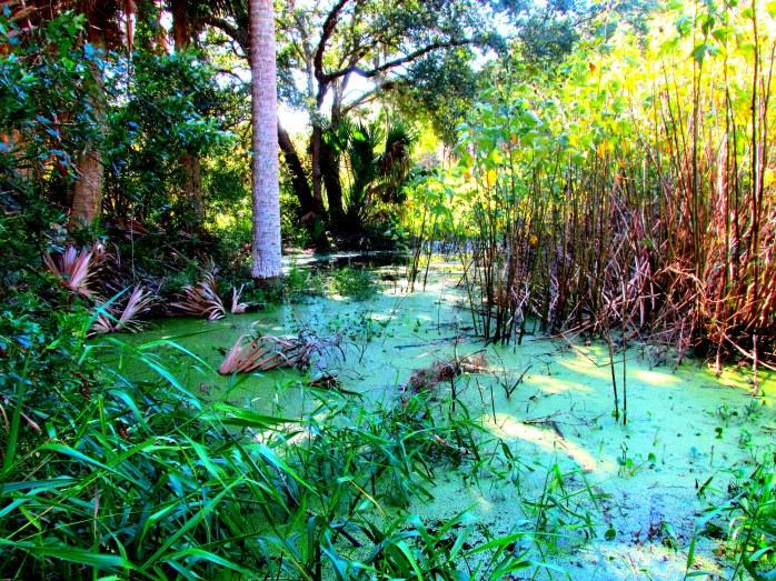greenswampbogpathJI27Sept2013
