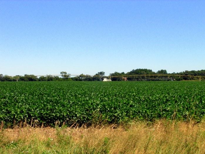 soybeanfieldirrigationGordonsPondTrailHenlopen30July2017
