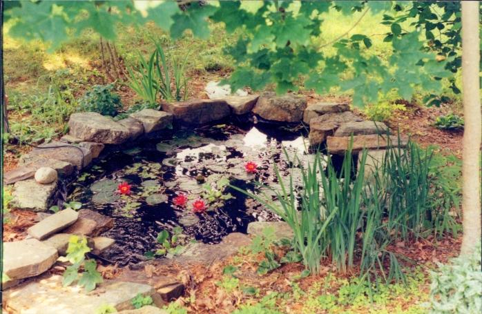 waterboropondliliesinbloomirisesJuly2002