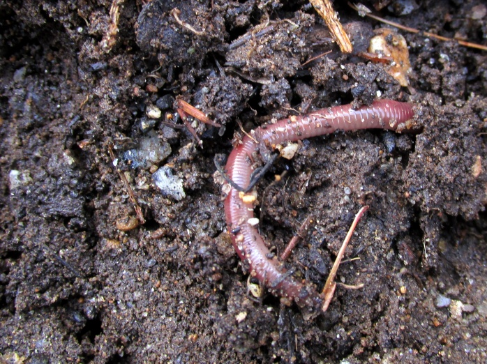 earthworm13April2015