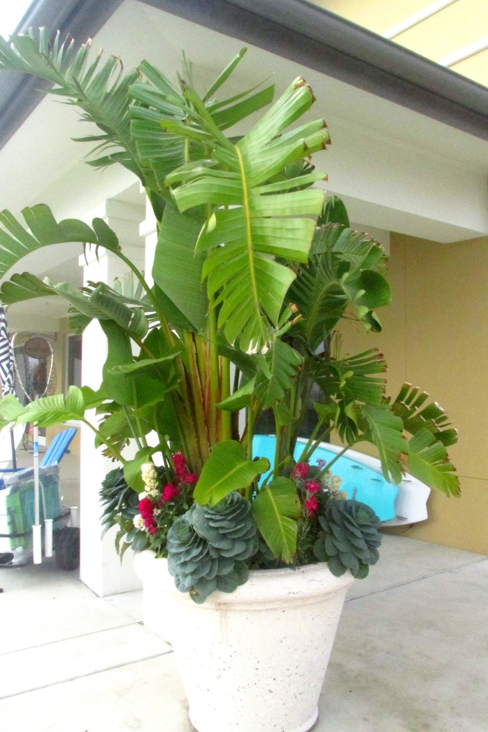 tropicalplanteroutsideKennedysJekyllIslandGA27Dec2016