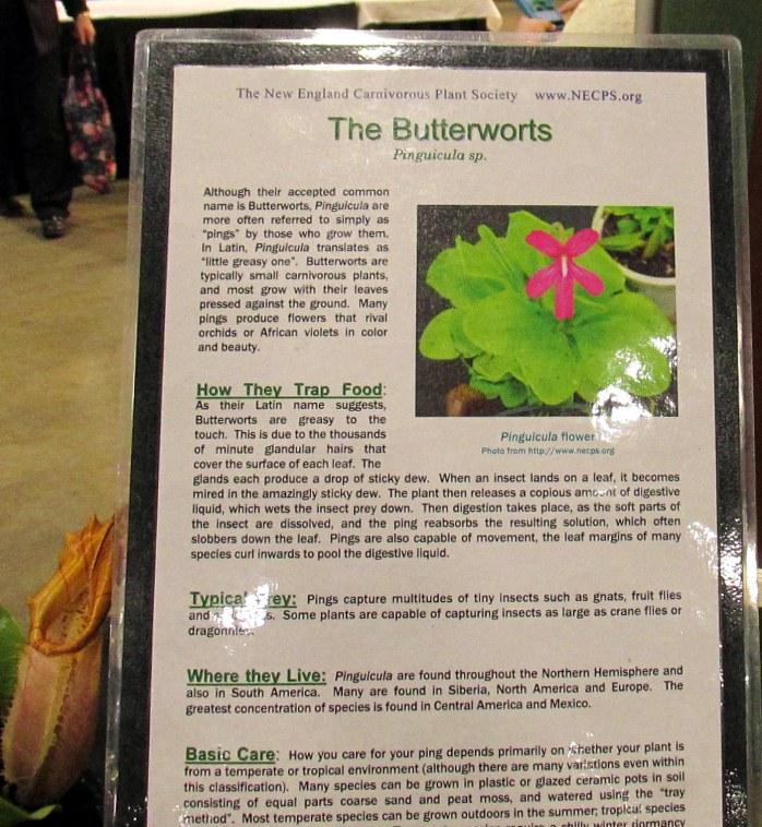 butterwortssignpitcherplantCarnivorousPlantsflowershowBostonMA14March2018