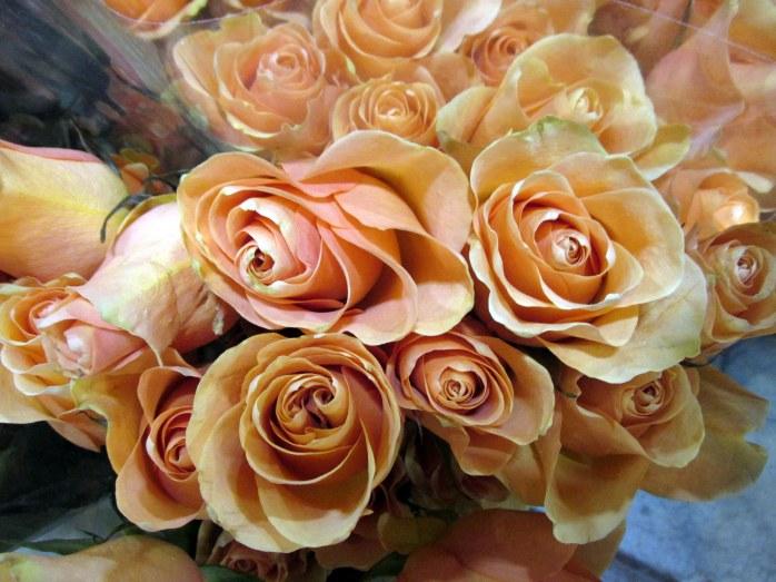 orangerosesflowershowBostonMA14March2018