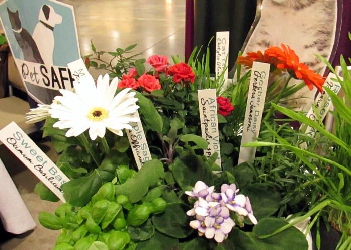 petsafeplantstogrowcatflowershowBostonMA14March2018