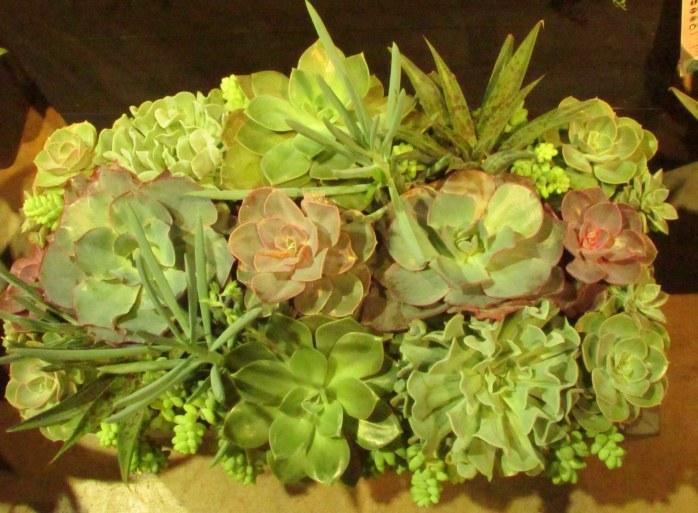succulentsflowershowBostonMA14March2018