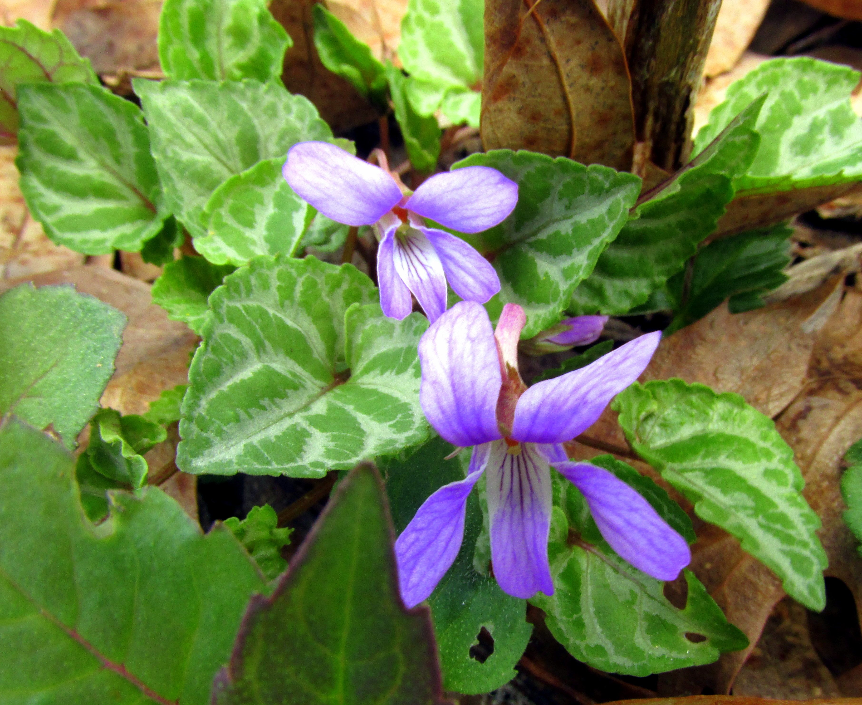 Early Spring Bloomers For Pollination A Moveable Garden