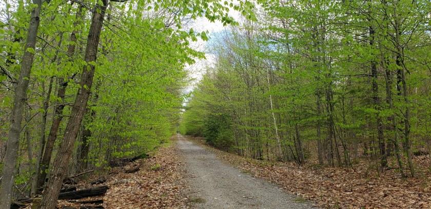 trailspringgreenNRTAndover16May2019